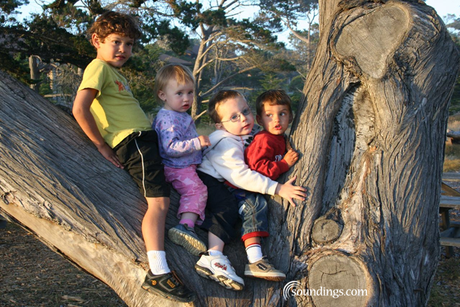 4 kids in tree